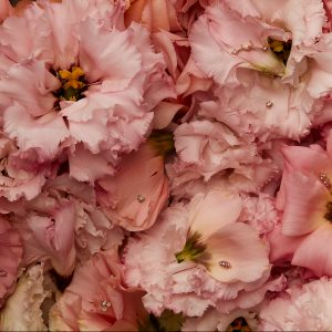 pink flowers with jewels on petals
