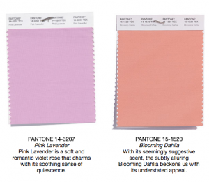 Pantone colors pink lavender and blooming dahlia
