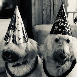 Irene Neuwirth dogs new years