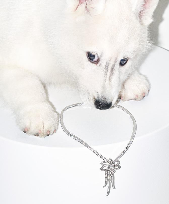 Dog licking diamond necklace