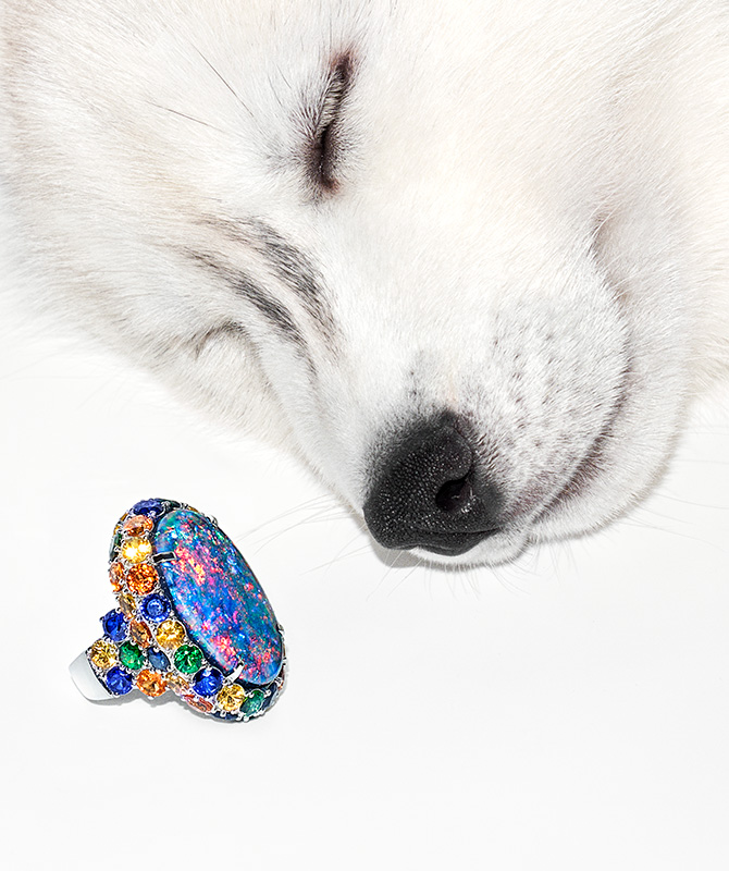 Dog sleeping with opal ring