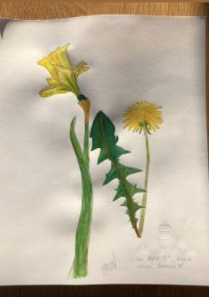 Brent Neale flower