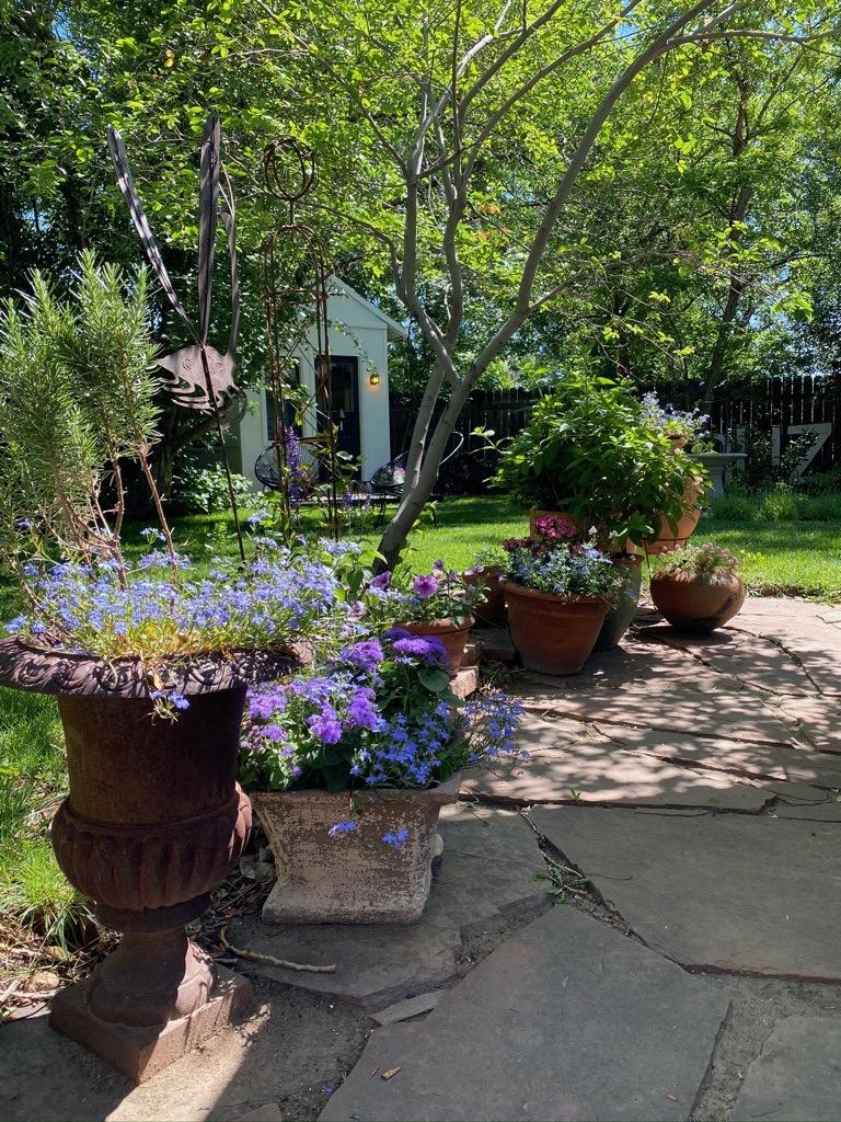 Hirschey's backyard in Colorado