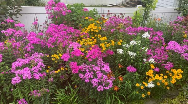 Peggy Jo Donahue garden