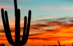 tucson sunset silhouette