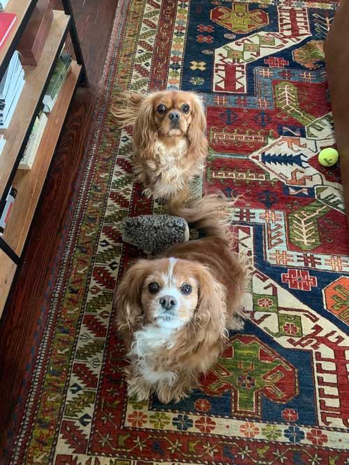 Judi Powers dogs