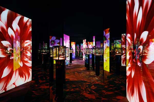 VCA Florae exhibit