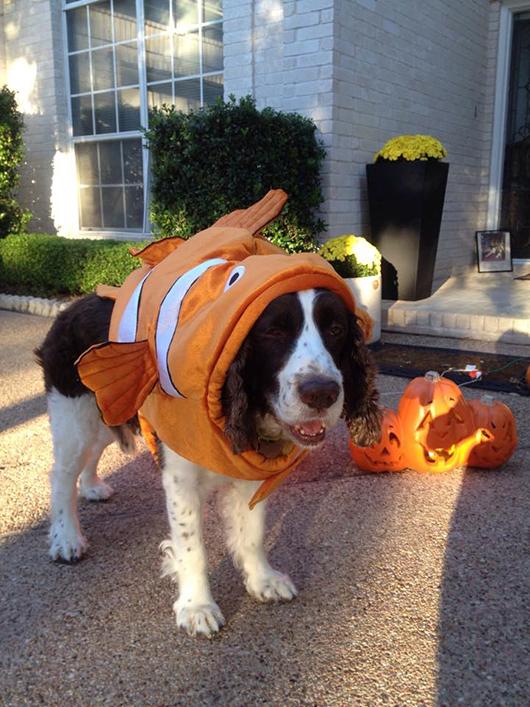 Bridges Henneberry (mom is Pat Henneberry of The Jewelry Coach) as Nemo
