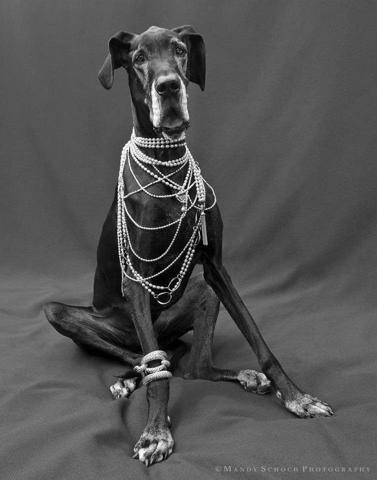 Gigi Metzger the Great Dane in Slane Jewelry