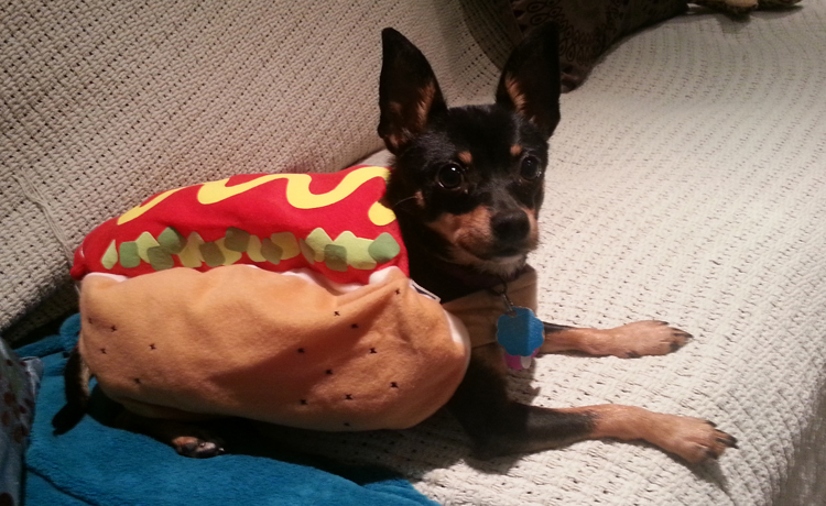 Pookie the dog owned by Carolyn Thamkul, vice president of Belle Etoile, as a hot dog