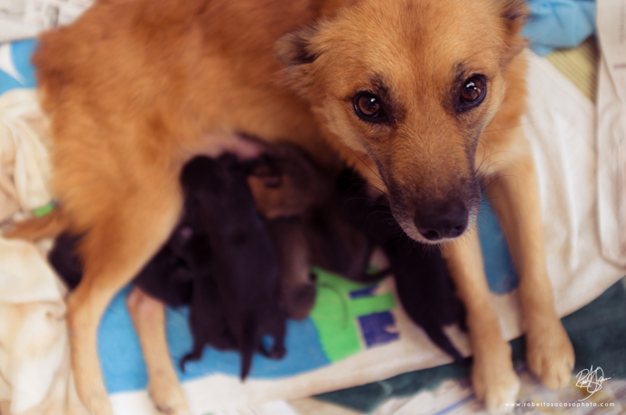 Silvia Leech's most recent Guatemalan dog rescue, Lucy, and her pups