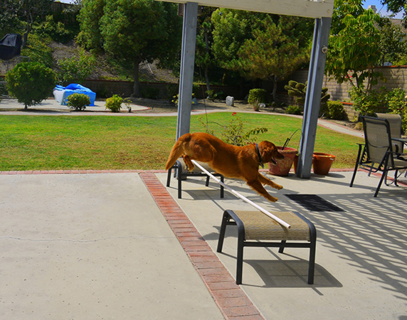sonya-therapy-dog-exercise-jump-5.jpg