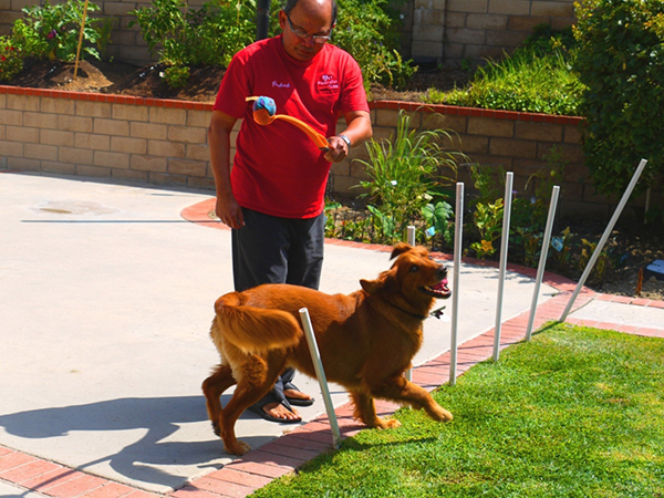 sonya-therapy-dog-exercise-maze-5.jpg